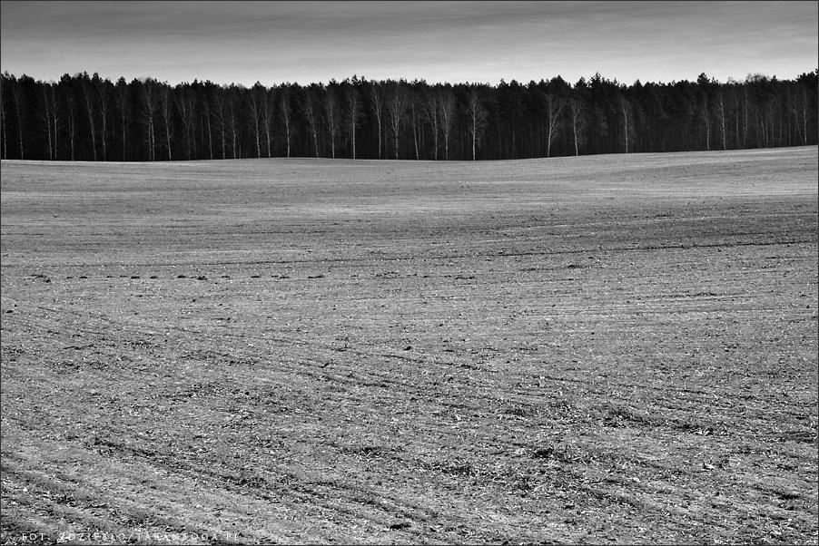 Pejzaż - Rusinowo
