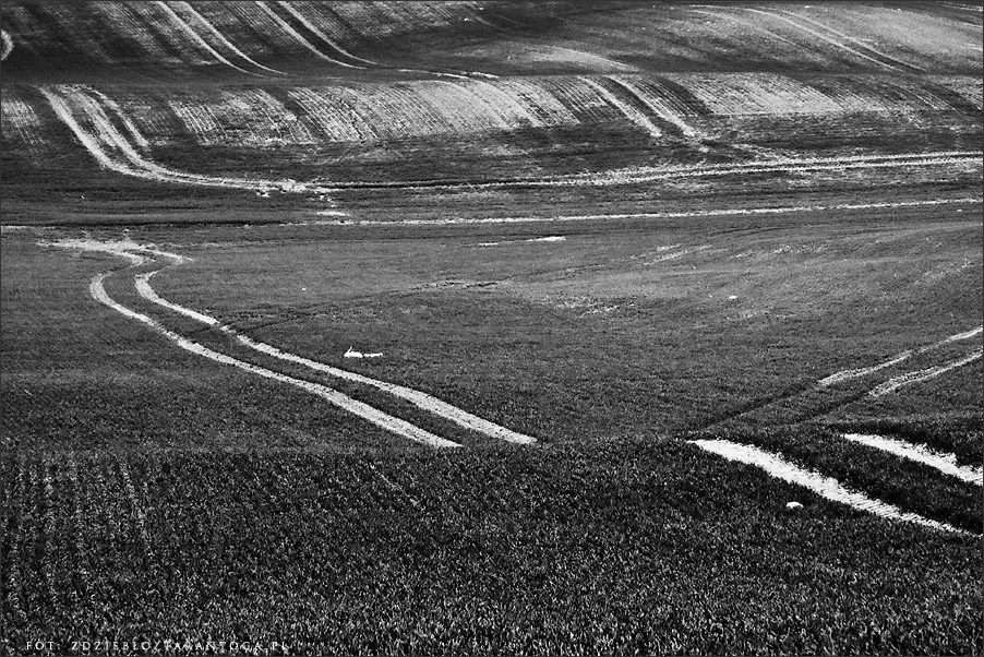 Szydłowo - pola