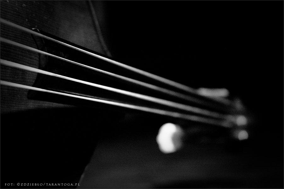 jazz odnowa festiwal piotr wojtasik quartet
