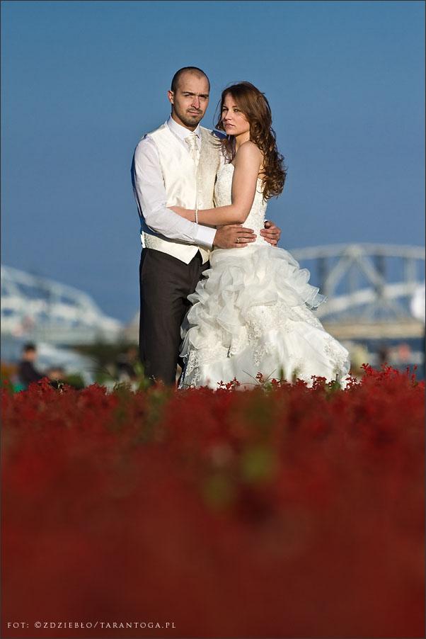 sesja ślubna sylwia dawid bulwar kwiaty