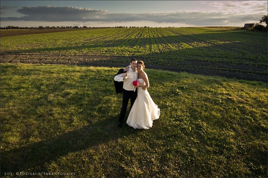 sesja ślubna joanna maciej pole